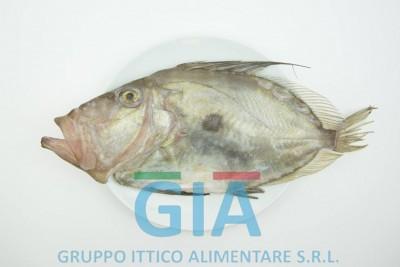 gruppo ittico alimentare (1)