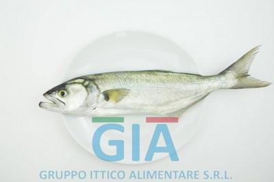 gruppo ittico alimentare (10)