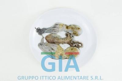 gruppo ittico alimentare (11)