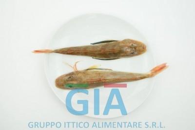 gruppo ittico alimentare (13)