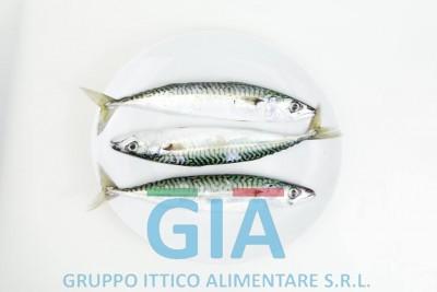 gruppo ittico alimentare (14)
