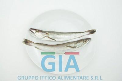 gruppo ittico alimentare (15)