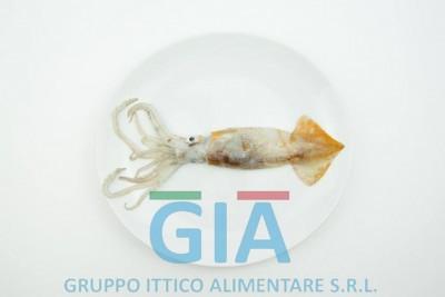 gruppo ittico alimentare (17)