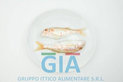 gruppo ittico alimentare (18)