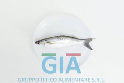 gruppo ittico alimentare (2)