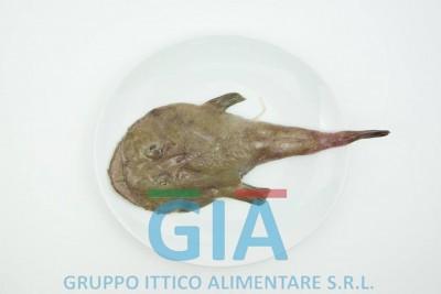 gruppo ittico alimentare (21)