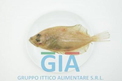 gruppo ittico alimentare (3)