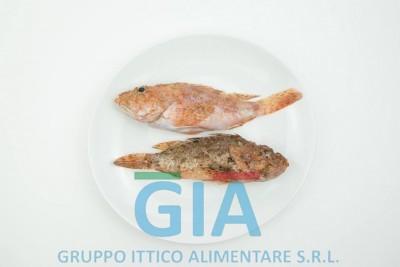gruppo ittico alimentare (4)