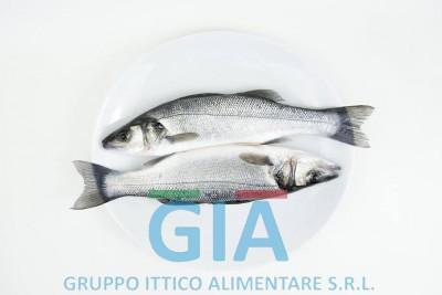 gruppo ittico alimentare (5)