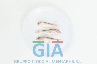 gruppo ittico alimentare (8)